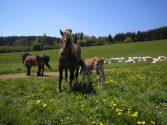 kveten-2011-004.jpg