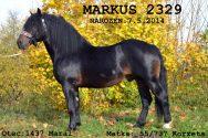 markus-box.jpg